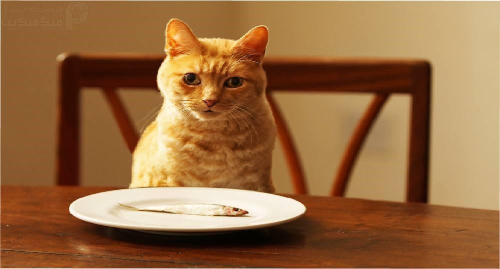 راهنمای اصولی تغذیه گربه برای افراد مبتدی
