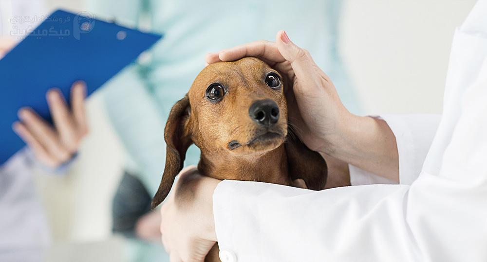 درمان پیشگیری از نارسایی کلیه سگ