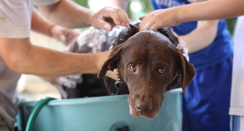 درمان گرمازدگی سگ