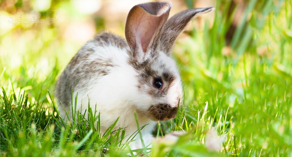 درمان تشنج خرگوش
