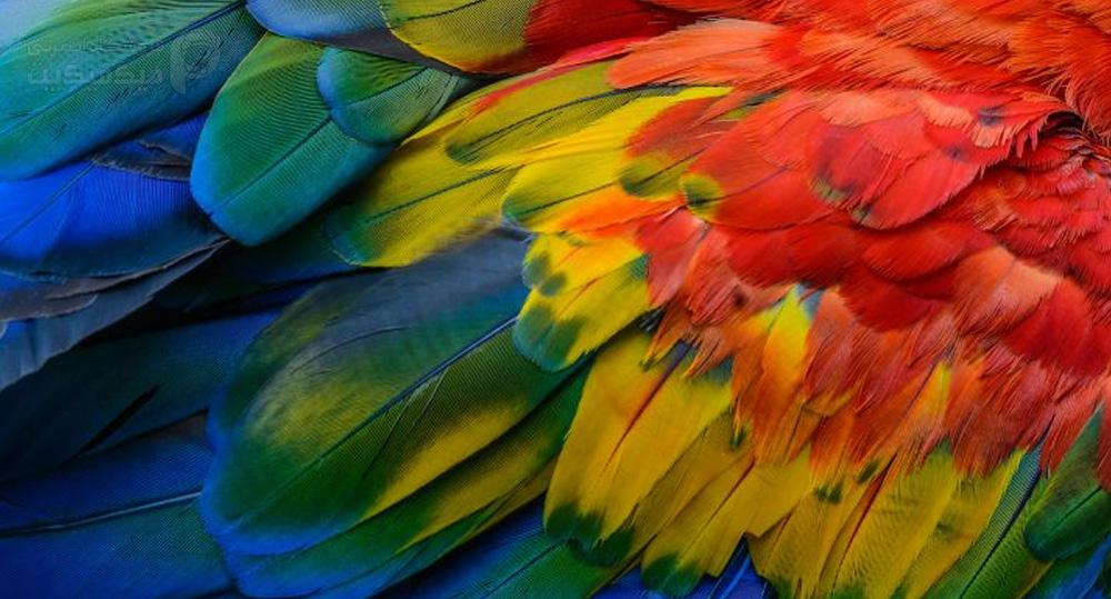 درخشندگی پر پرنده با ویتامین ها