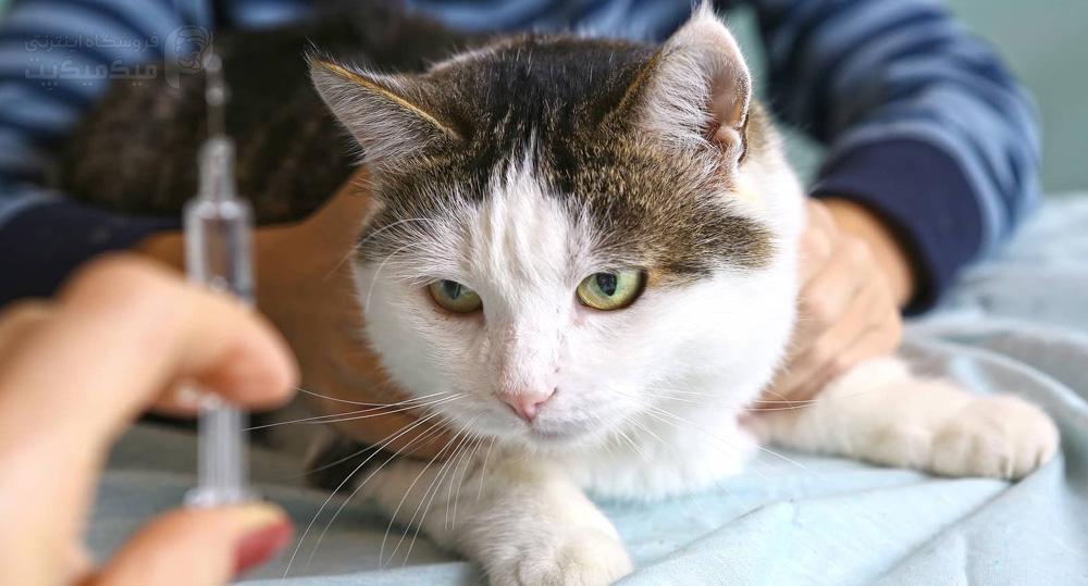 درمان دیابت گربه