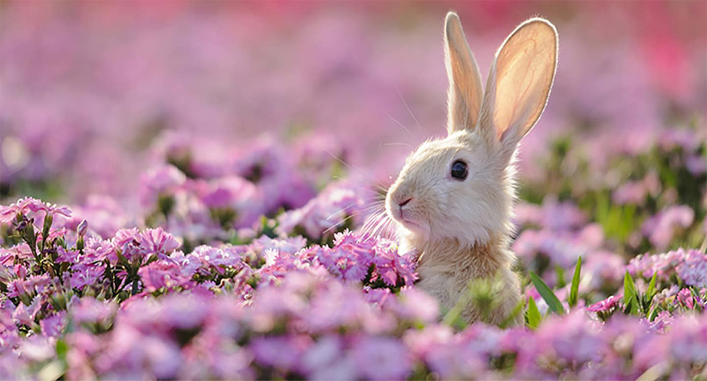 انتخاب اسم برای خرگوش