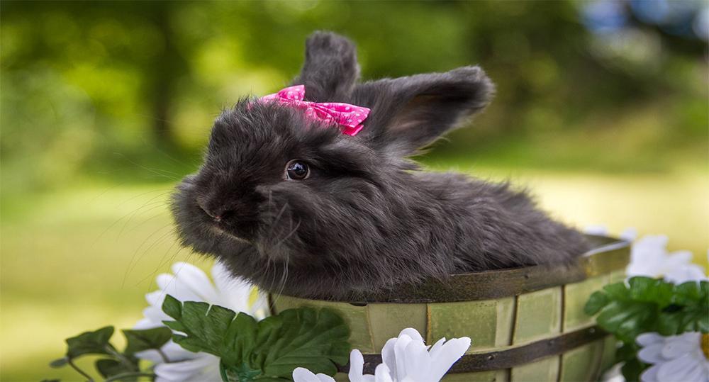 اسم برای خرگوش ماده