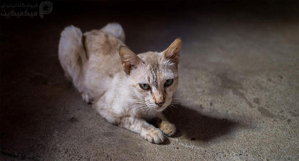 ۹ دلیل کاهش وزن گربه