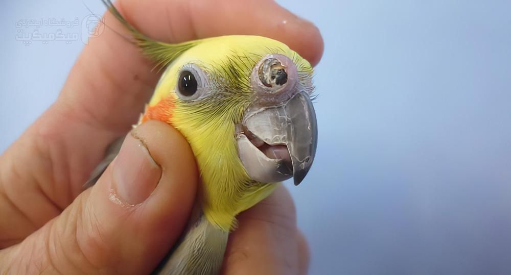 بیمارهایی که از کمبود ویتامین در بدن پرنده ایجاد میشود