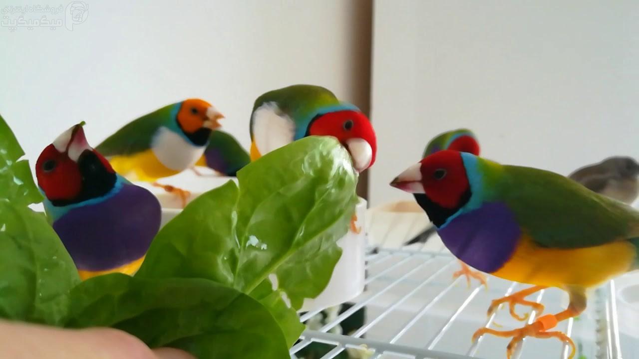 فواید اسفناج برای پرنده