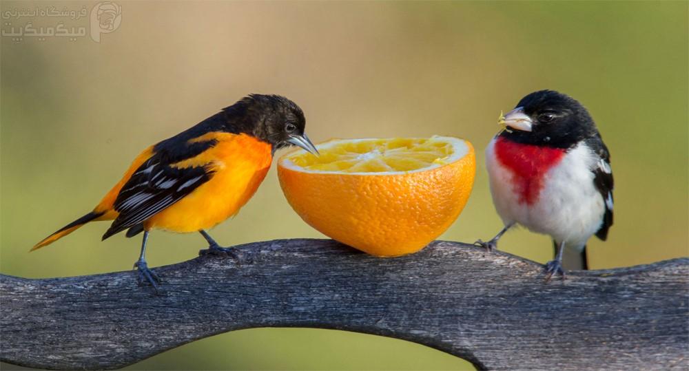 ضررهای مرکبات برای پرندگان