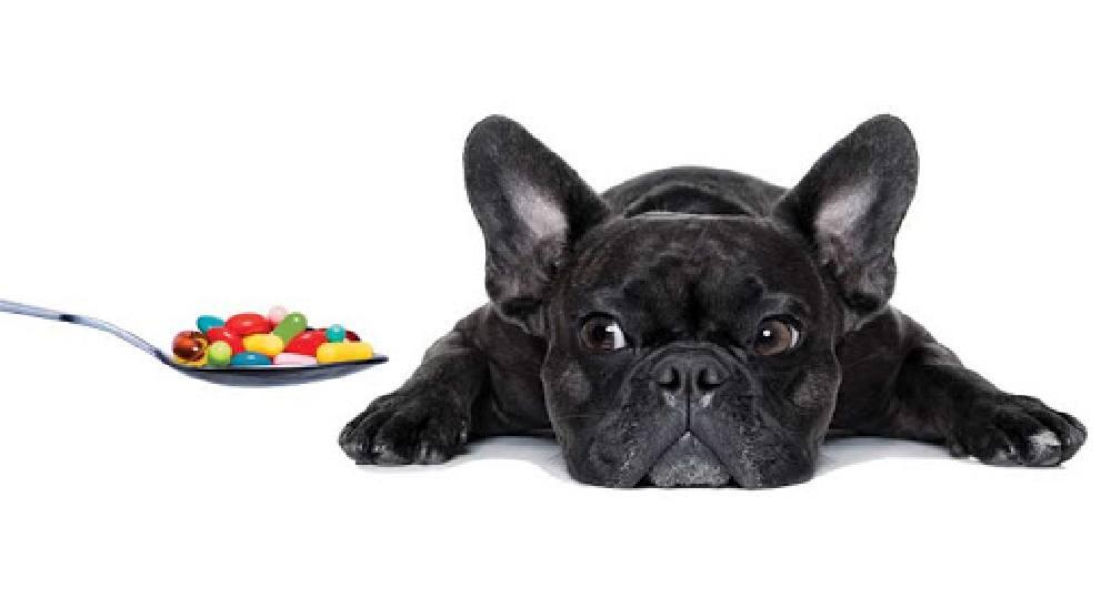 پروبیوتیک برای حیوانات خانگی