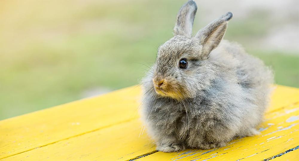 انتخاب نام برای خرگوش خاکستری