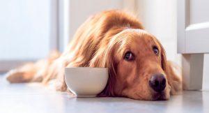 دلیل کاهش وزن سگ