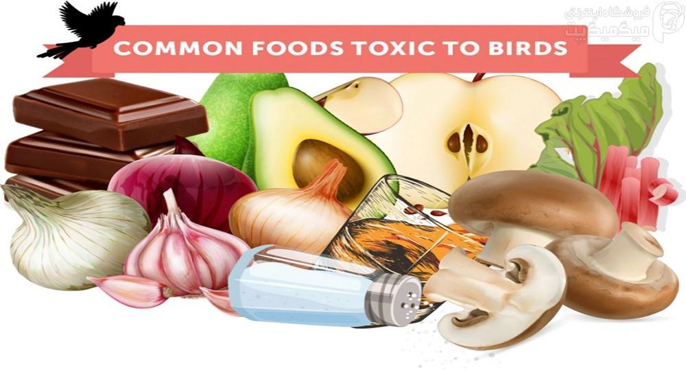 غذاهای مضر برای پرندگان