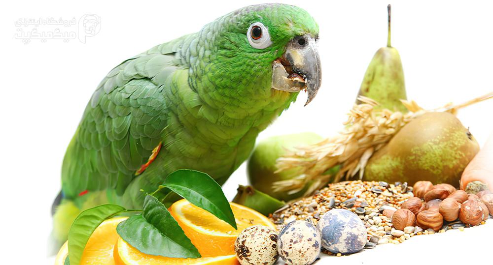 تقویت پر پرنده با ویتامین