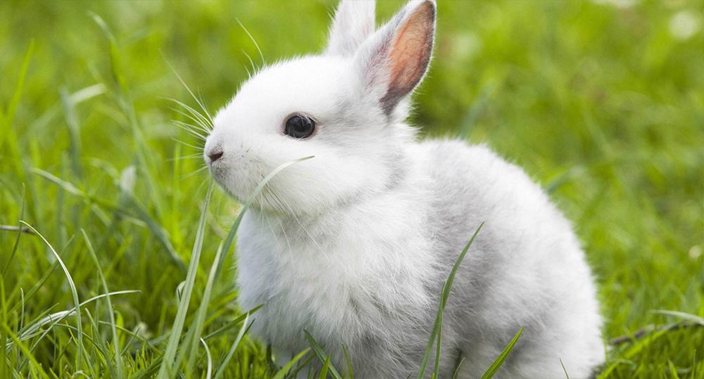اسم برای خرگوش سفید