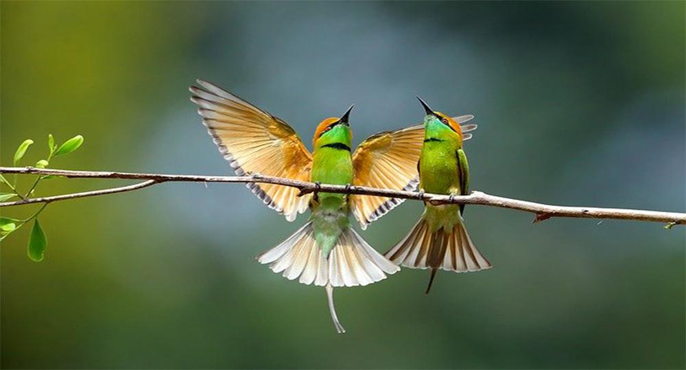 نام پرنده