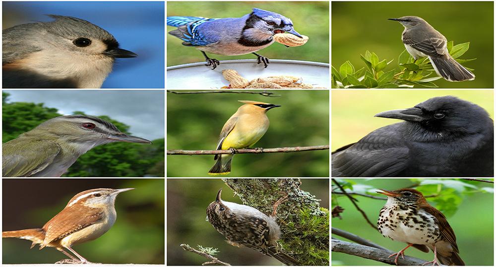 انتخاب اسم پرنده - نام پرنده