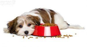 بهترین غذای سگ پیر