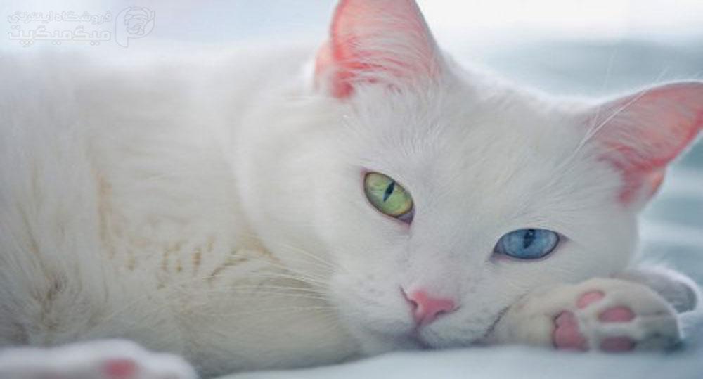 گربه32 4