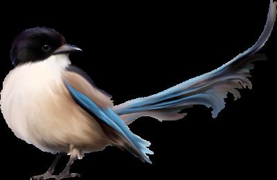 پرنده-ها